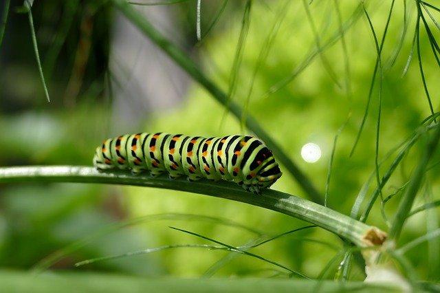 Krása nejen motýlích křídel