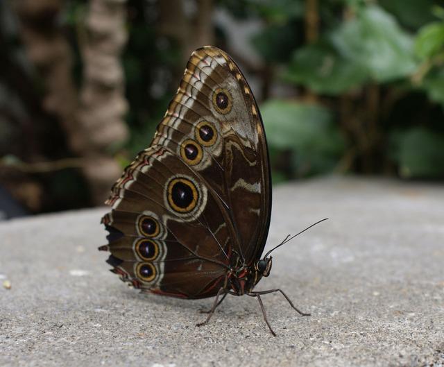 krása motýla