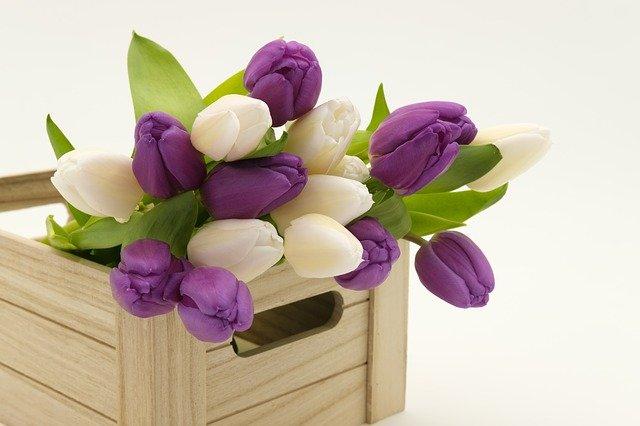 tulipány v bedýnce