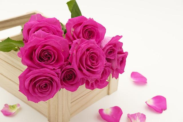 vůně růží