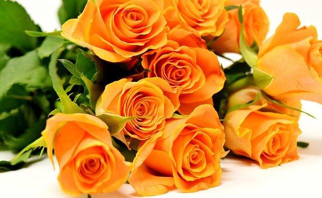 oranžové růžičky